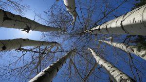 trees-1392484_640